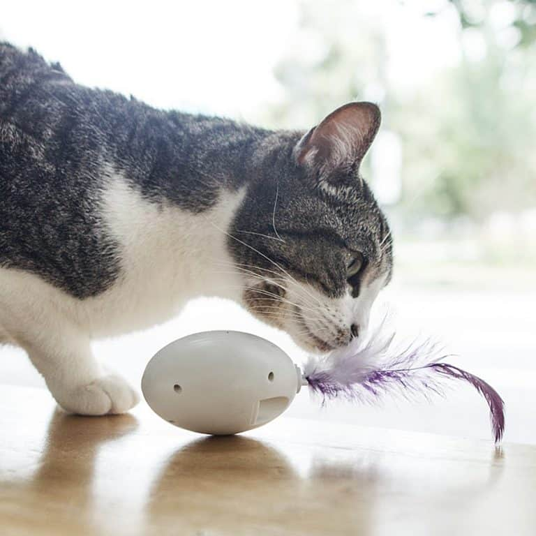 PDX Pet Design SHRU The Intelligent Cat Companion Toy