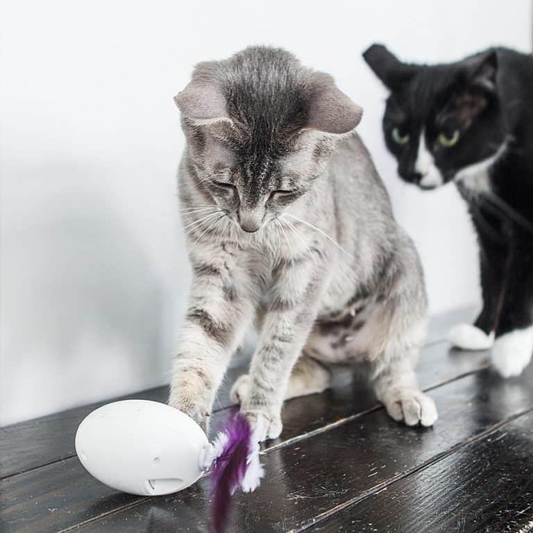 PDX Pet Design SHRU The Intelligent Cat Companion USB Rechargable Battery