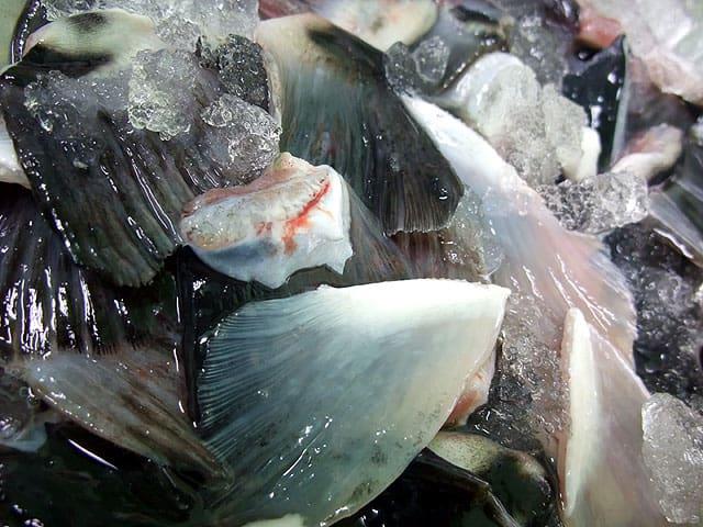 Grilled Torafugu Fin Japanese Blowfish Delicacy Freshly Cut