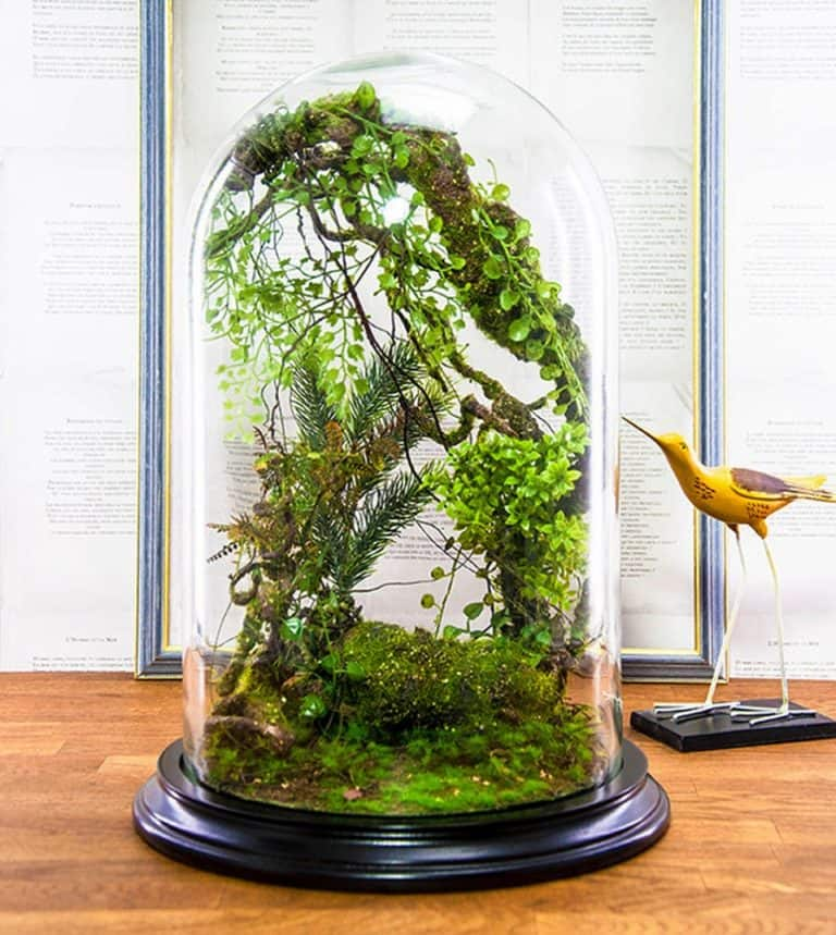 Vert + Sauvage Forest Terrarium Of Artificial Plants Polysteryne