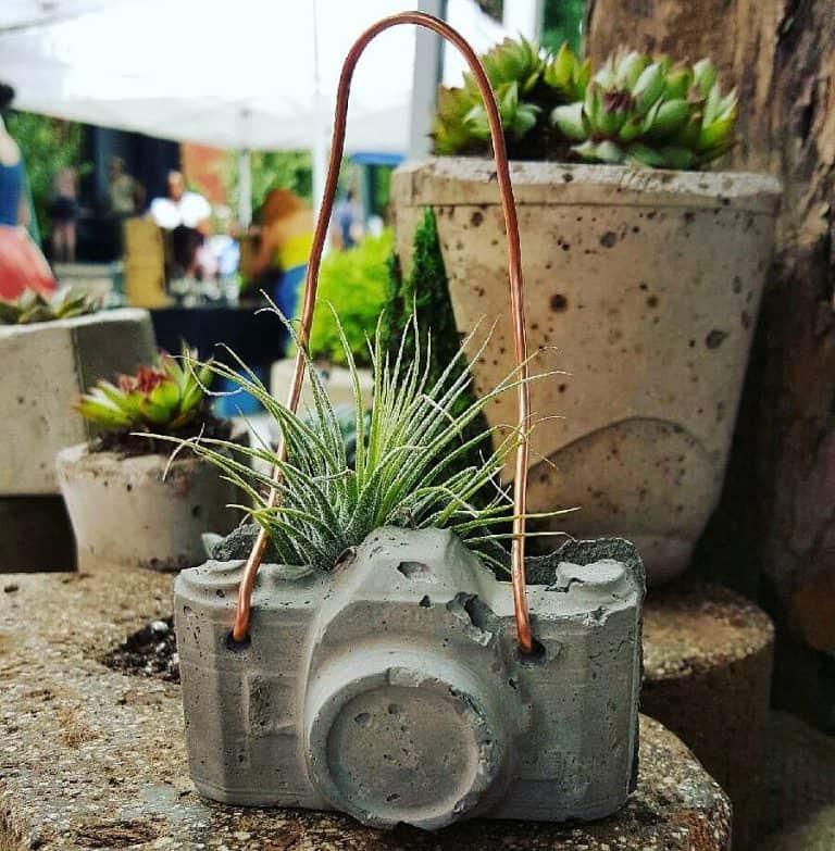 Dovekien Finch Concrete Camera Air Plant Garden