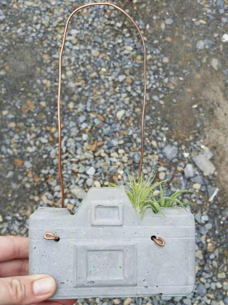 Dovekien Finch Concrete Camera Air Plant Gardening