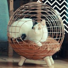 Designer ball for the little furball.