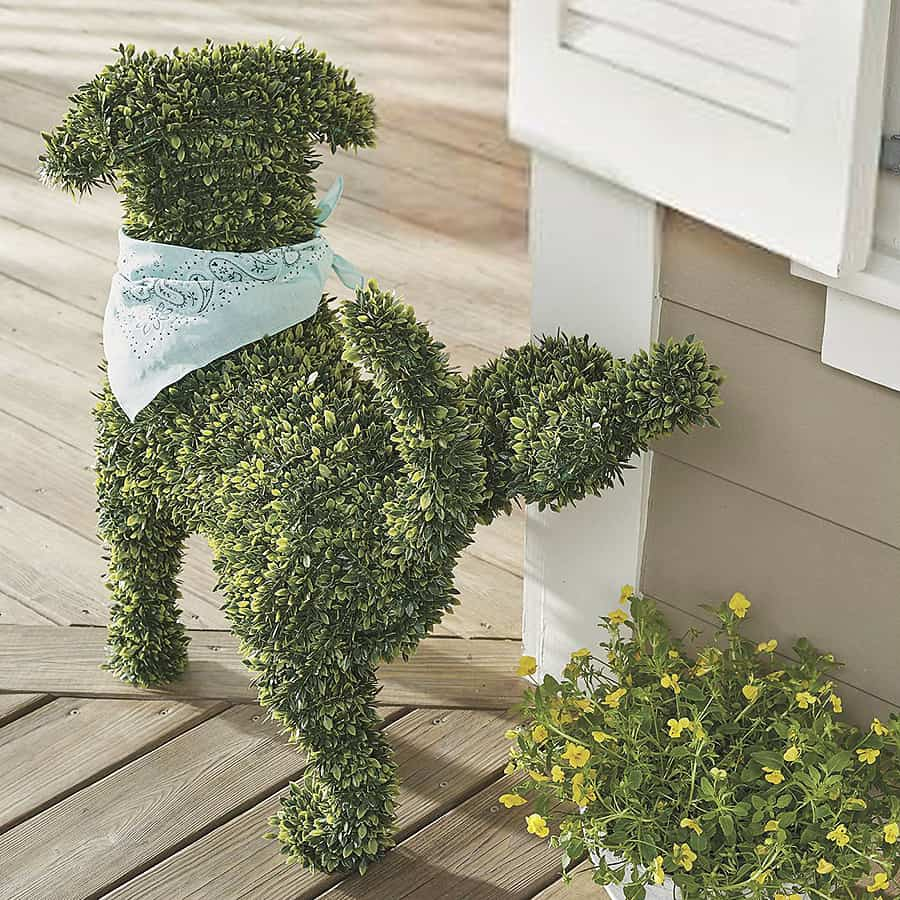 The greenest dog you'll ever see.