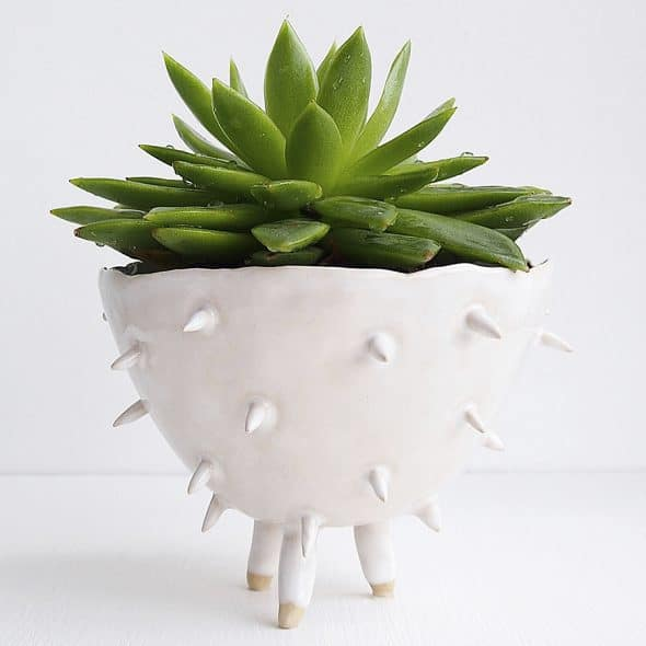 Is your succulent not spiky enough for you?