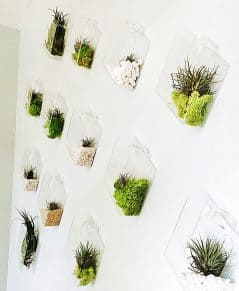 Is your wall not organic enough for you?