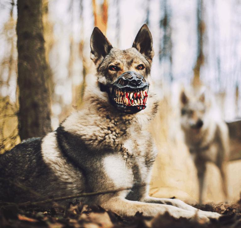Reedog Werewolf Dog Muzzle Costume
