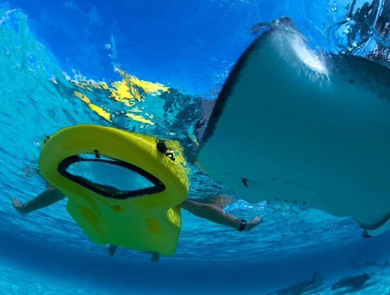 ReefBoard Zayak Sea Sled Underwater Panoramic View