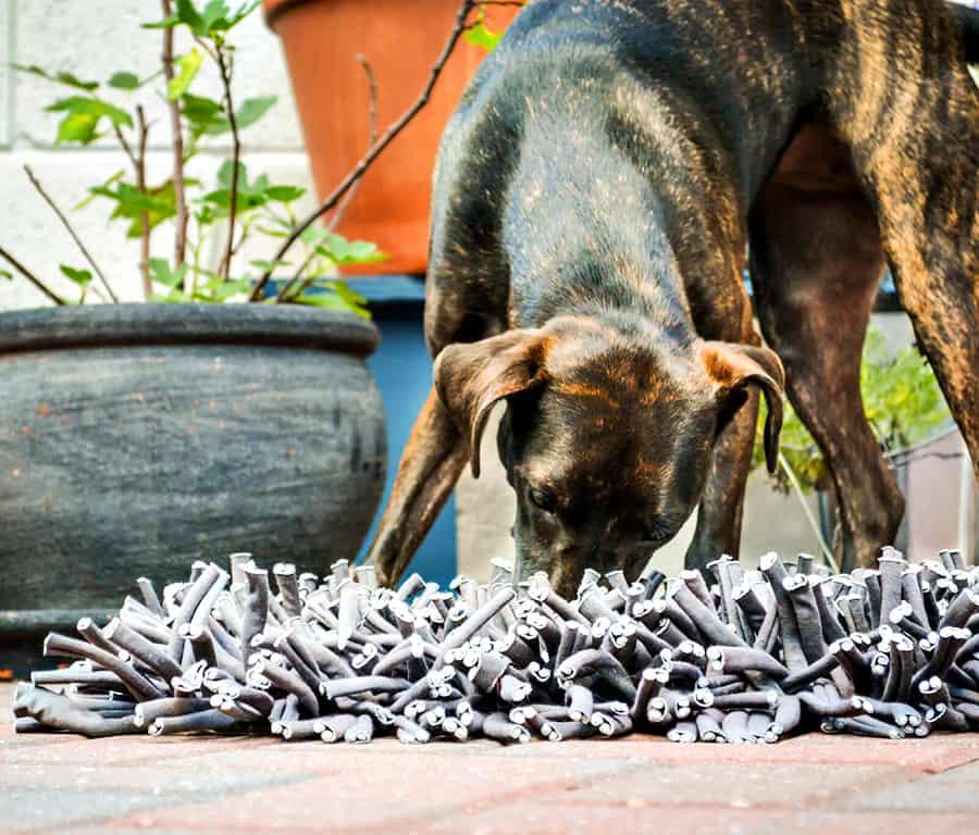 Sharpen your dog's foraging instincts.