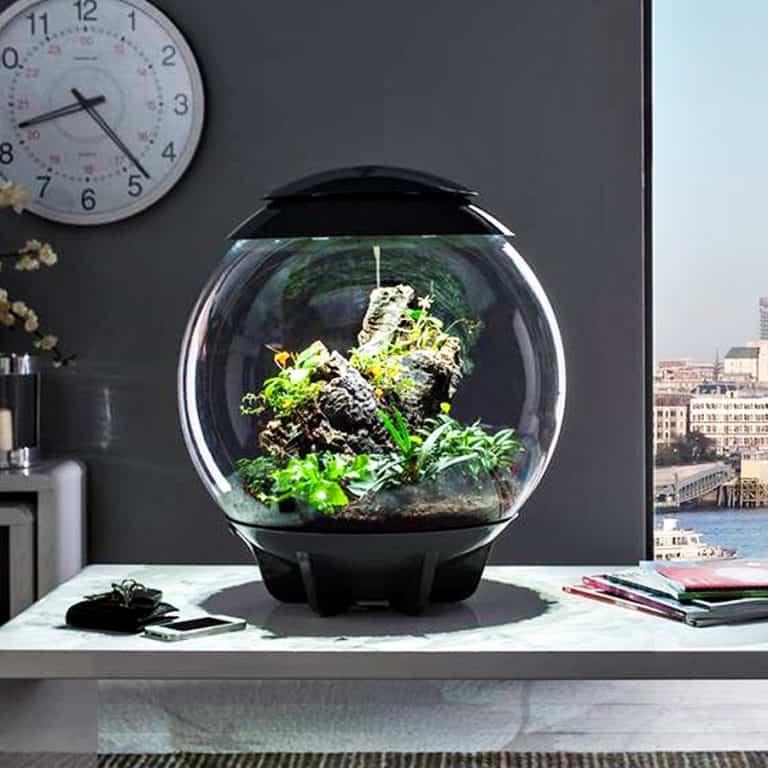 biOrbAIR Terrarium with LED Light Automated