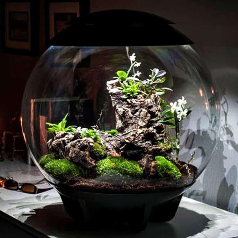 biOrbAIR Terrarium with LED Light Micro Climate