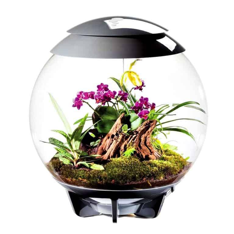 biOrbAIR Terrarium with LED Light Pet Plant
