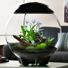Grow a small tropical rainforest in your living room.