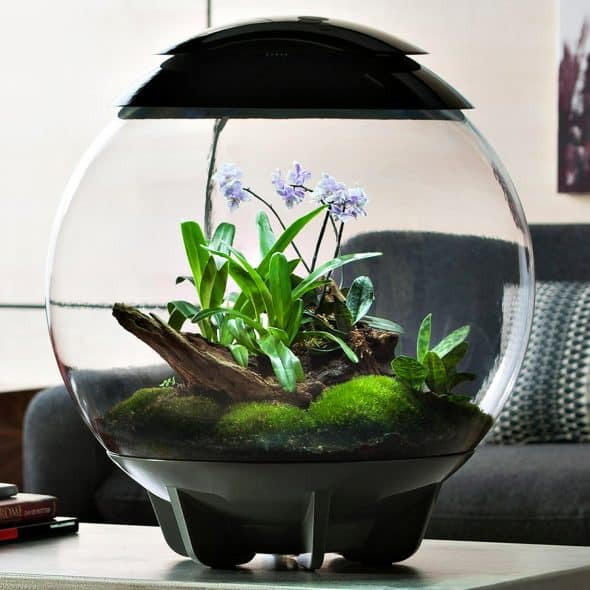 biOrbAIR Terrarium with LED Light Pet Supply