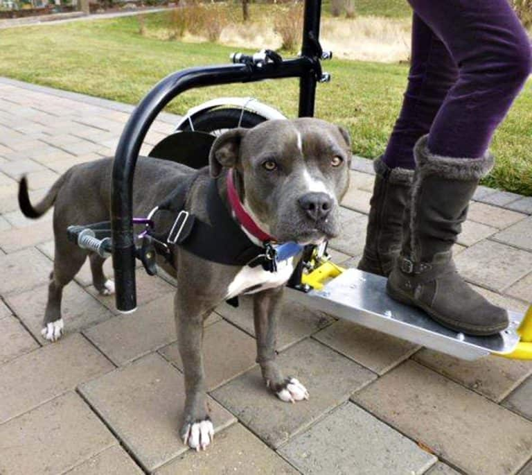 Dog Powered Scooter Ergonomic Product