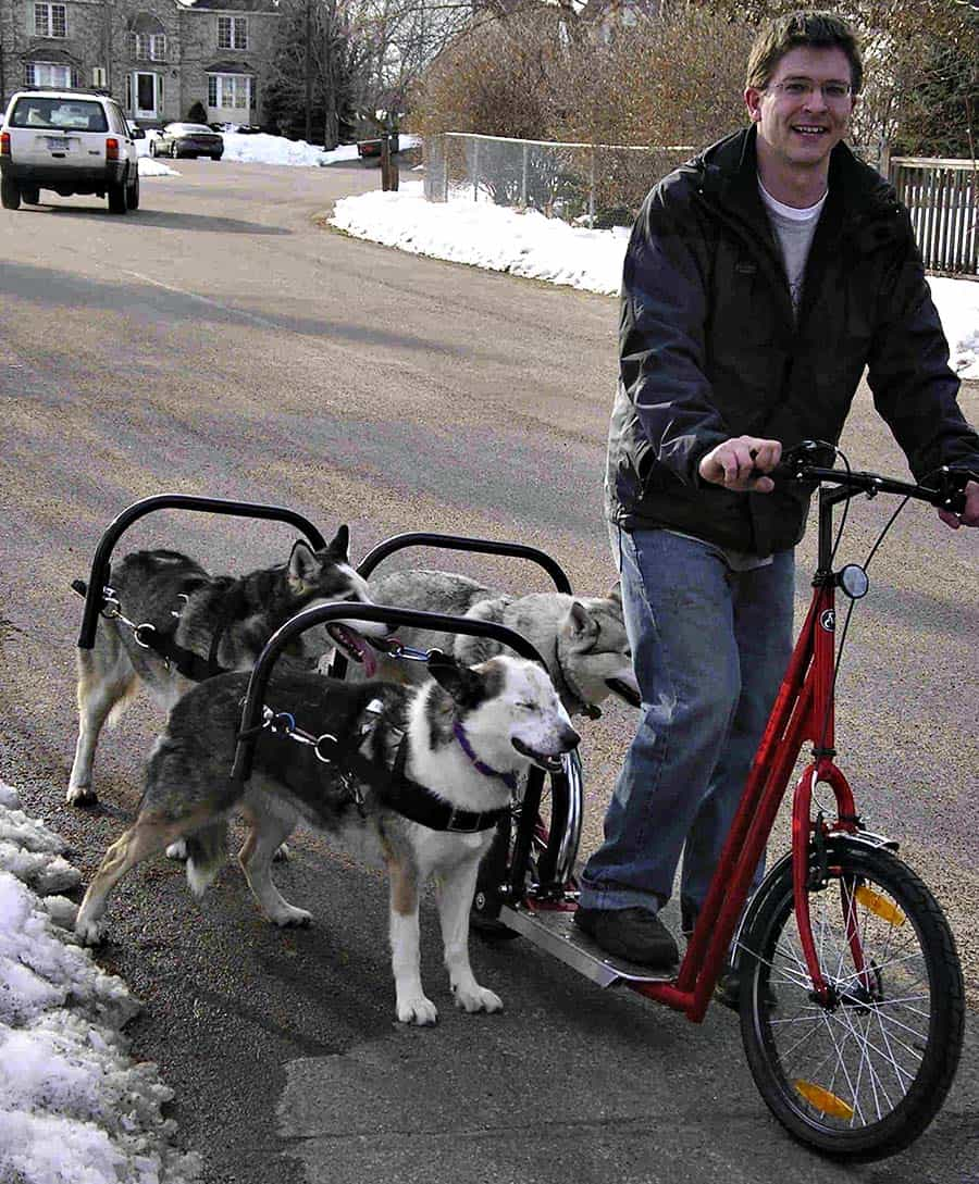 Dog Powered Scooter Novelties