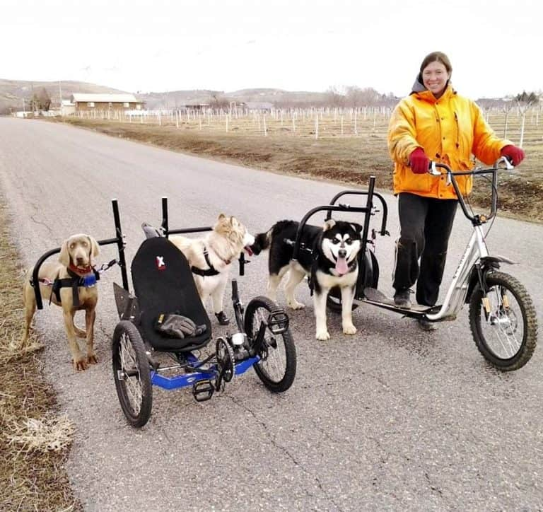 Dog Powered Scooter Vehicle