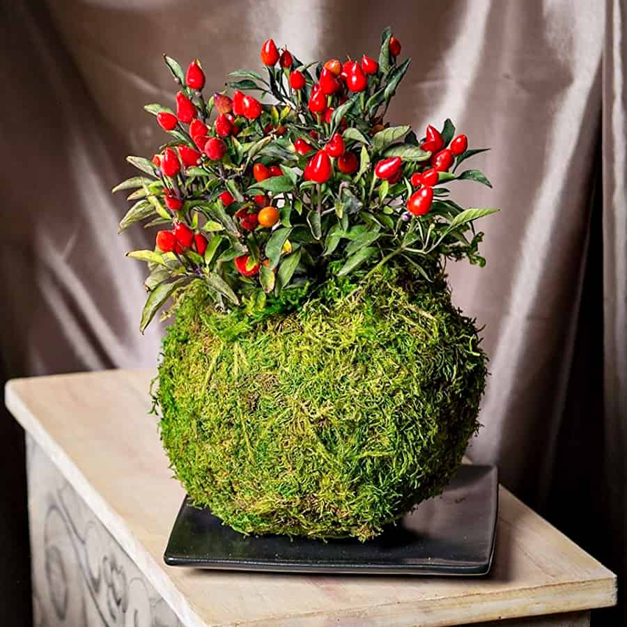 Gardener's Supply Company Original Kokedama Kit Moss Ball