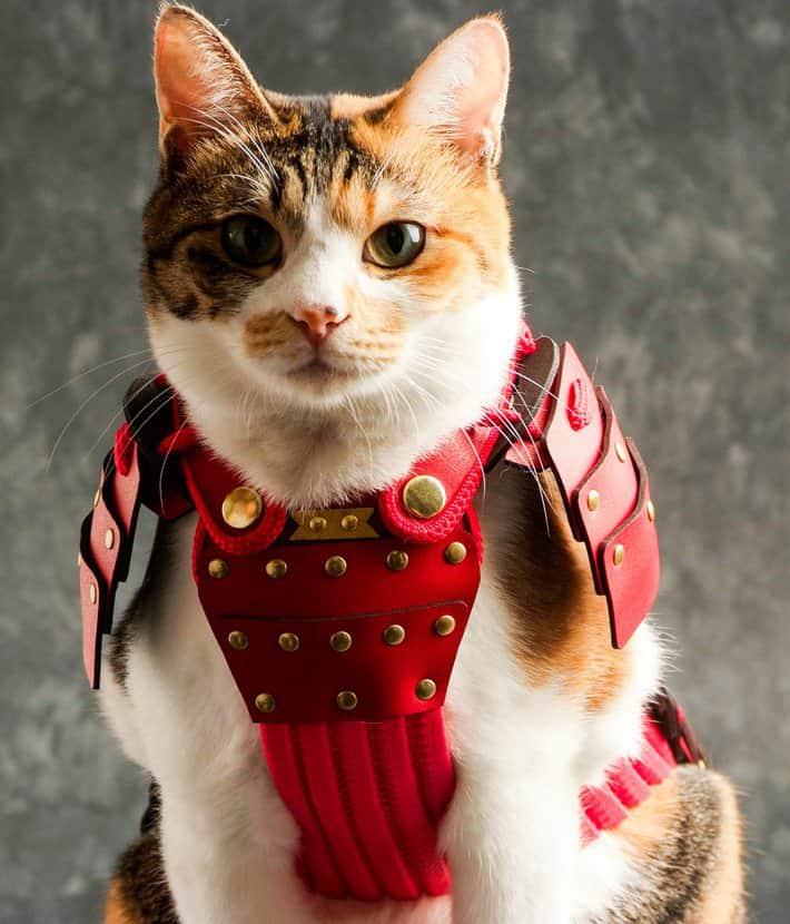 Samurai Age Red Samurai Cat Pet Costume