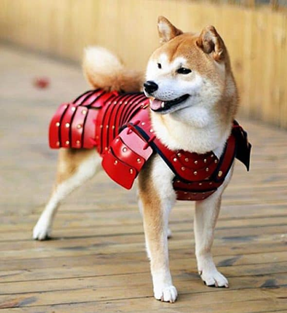 Samurai Age Red Samurai Dog Pet Costume