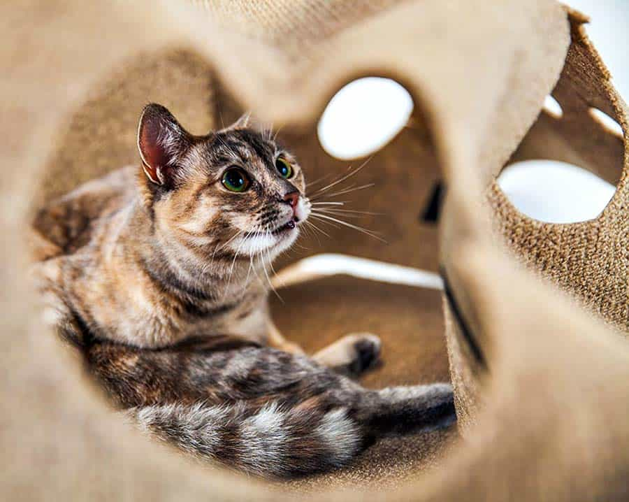 SnugglyCat The Ripple Rug Pet Product