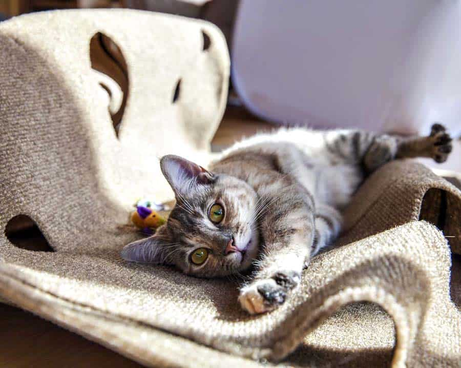 Snugglycat The Ripple Rug Noveltystreet