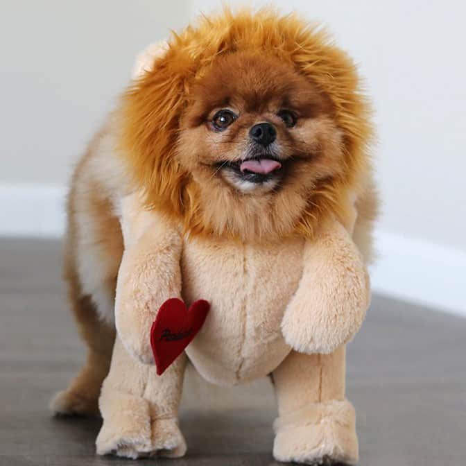 Adorable Lion Dog Costume
