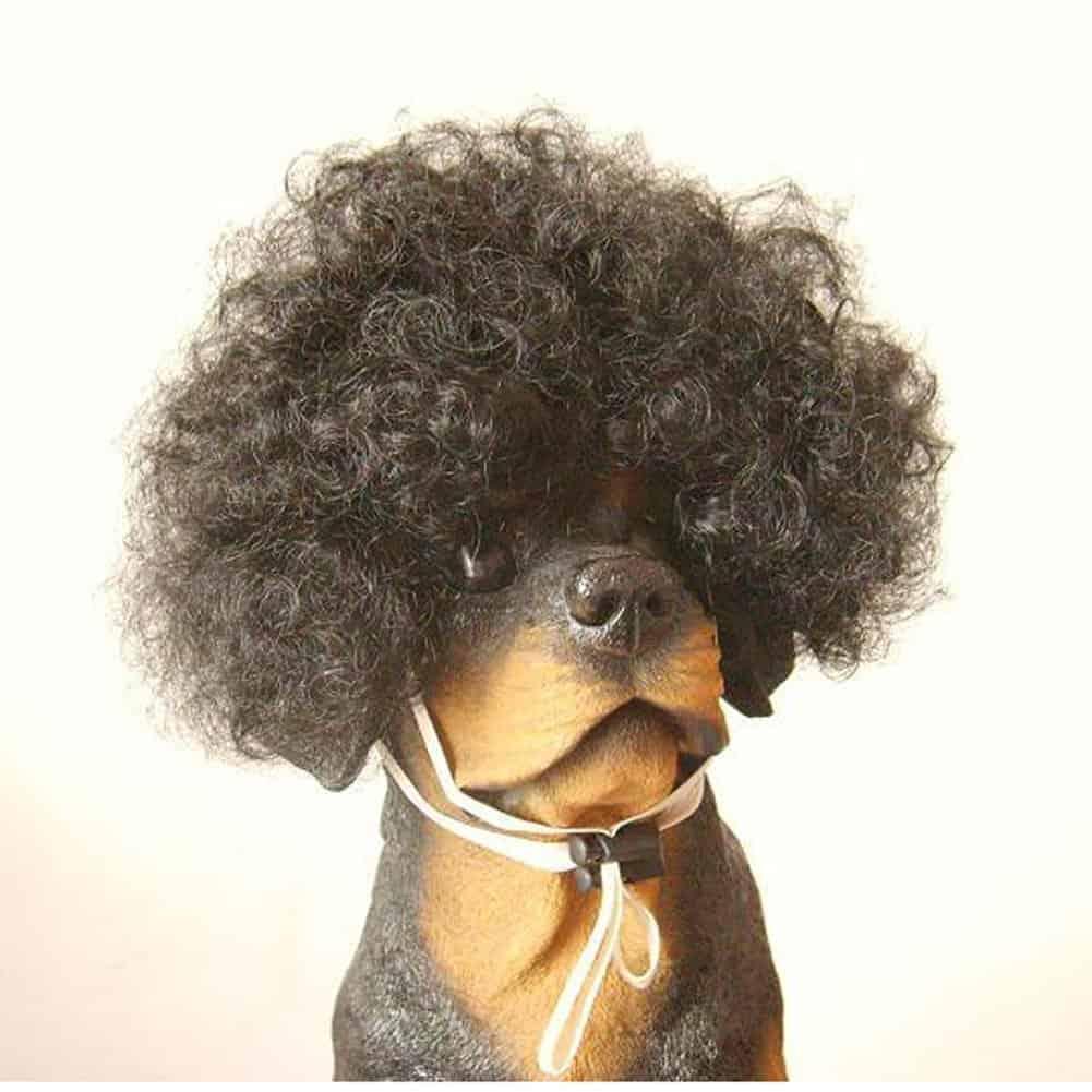 Afro Dog Wig