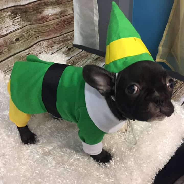 Bud the Elf dog Outfit