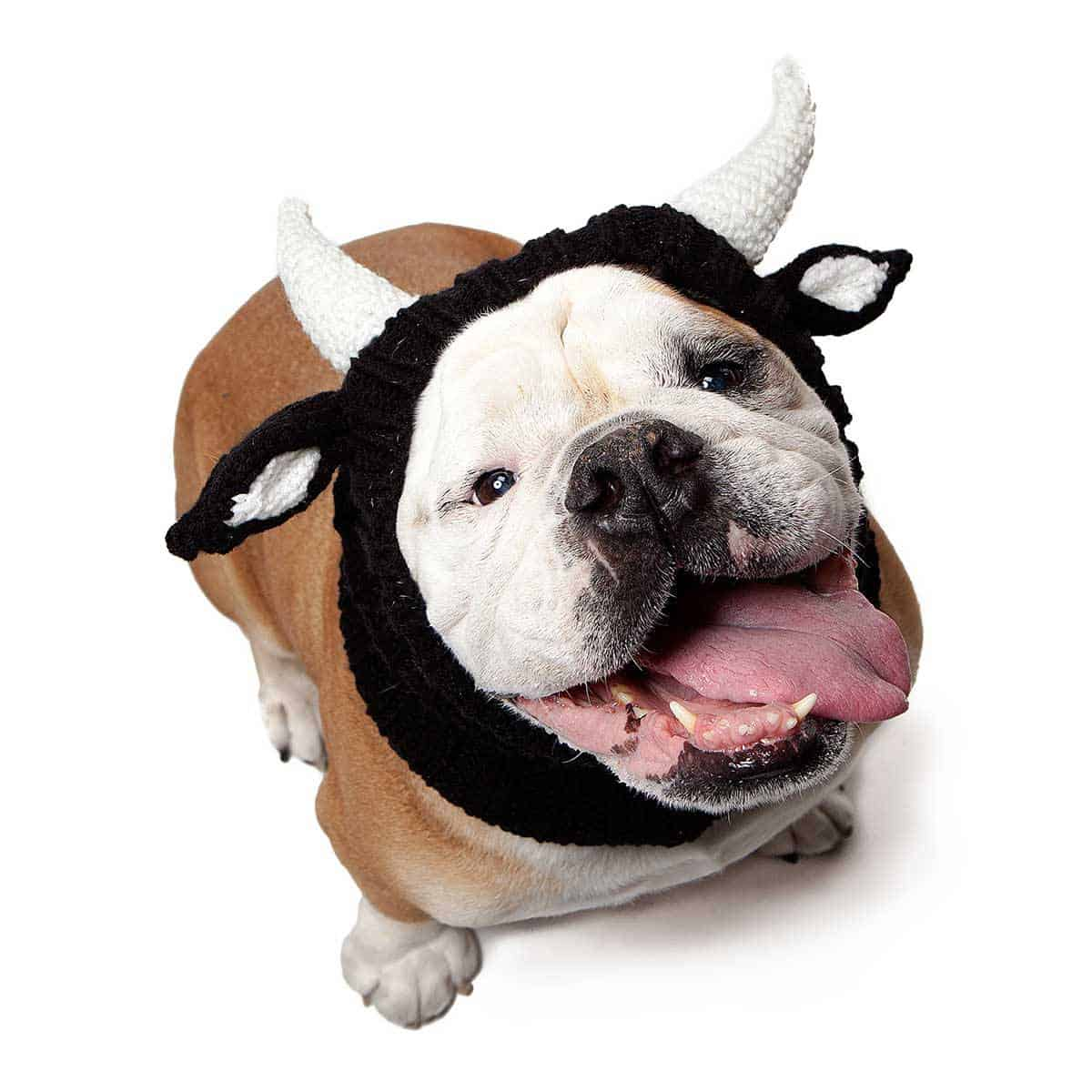 Bull Dog Snood Costume