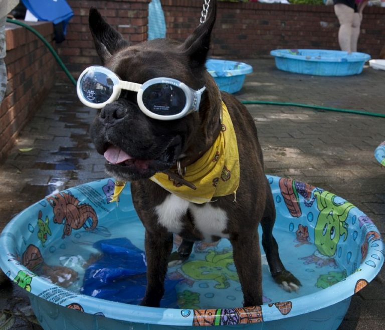 Brown dog in a blue tub wearing googles and yellow scarf costume