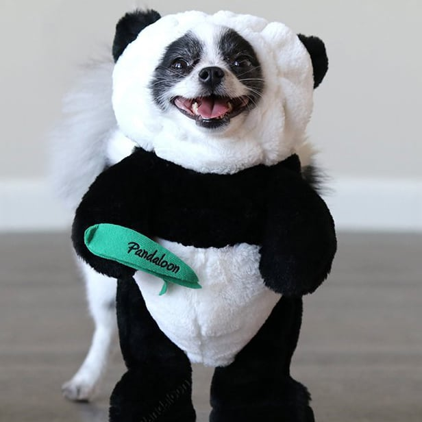 Cute Panda Dog Costume
