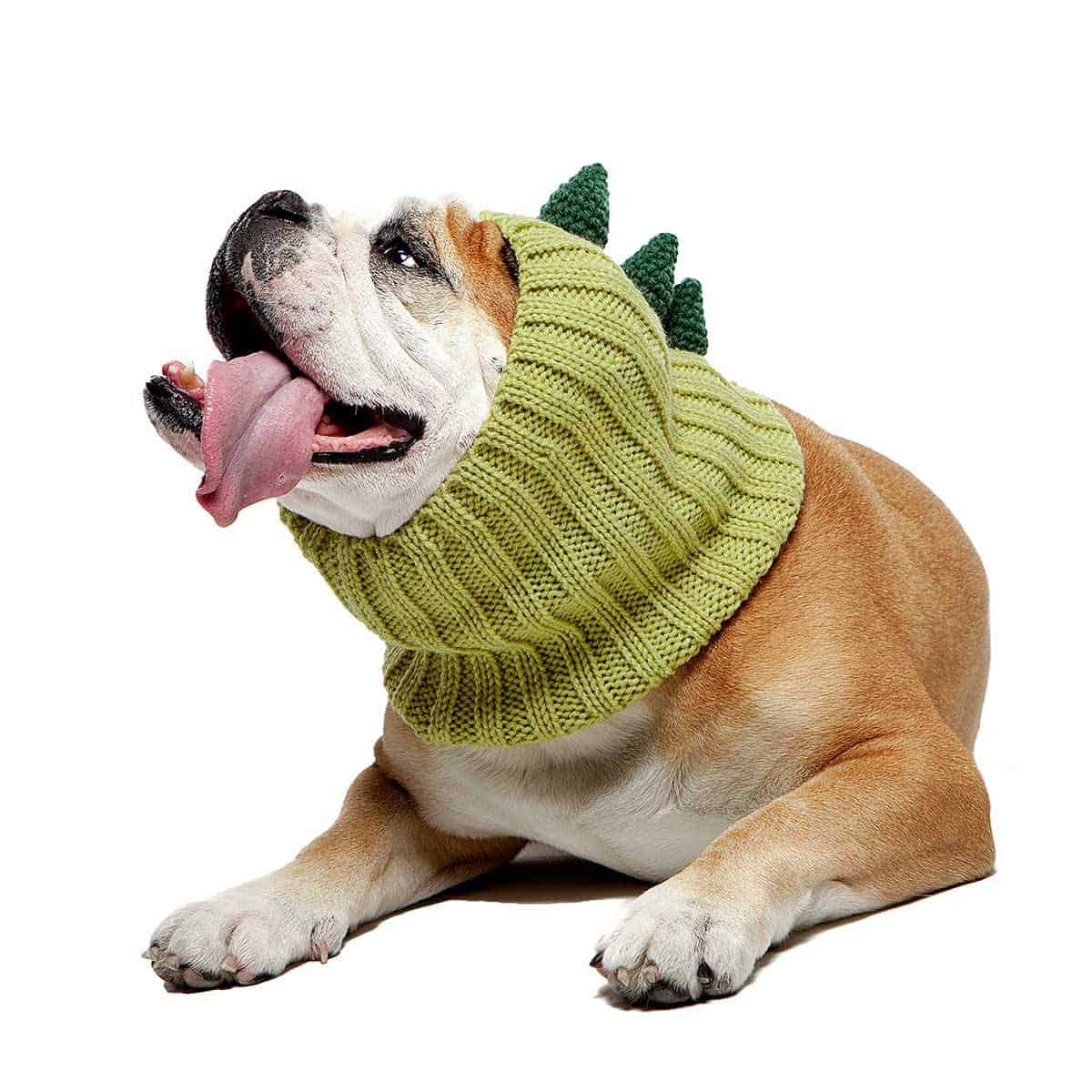 Bulldog wearing green crochet ear warmer dinosaur costume