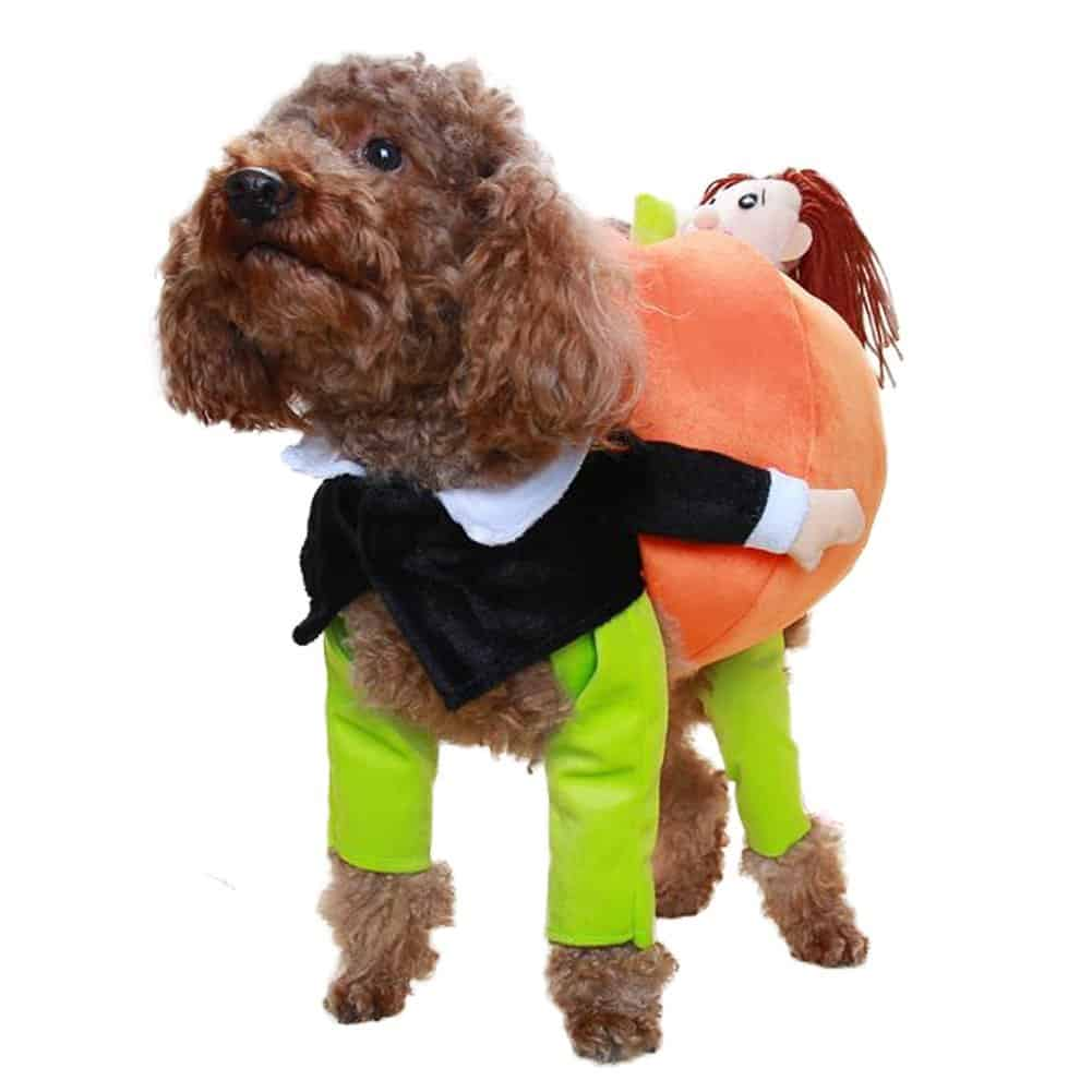 Dog Carrying a Pumpkin Costume