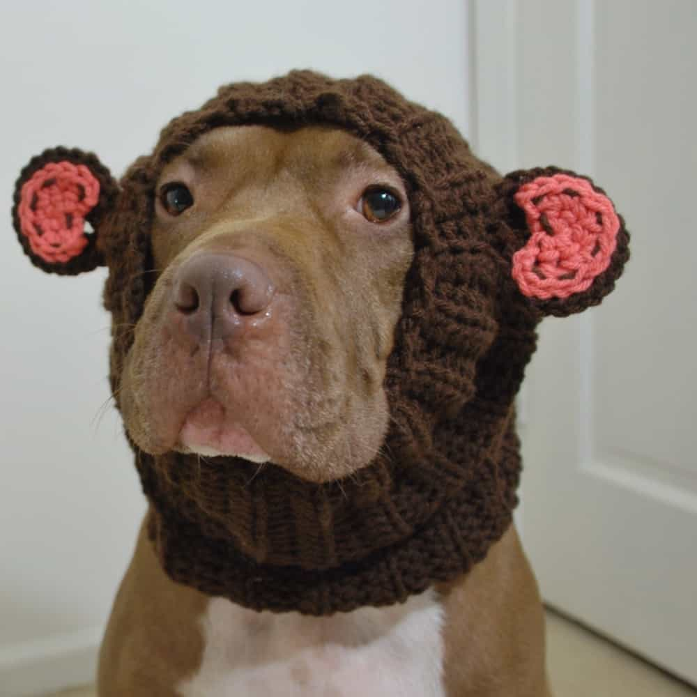 Dog Snood Monkey Costume