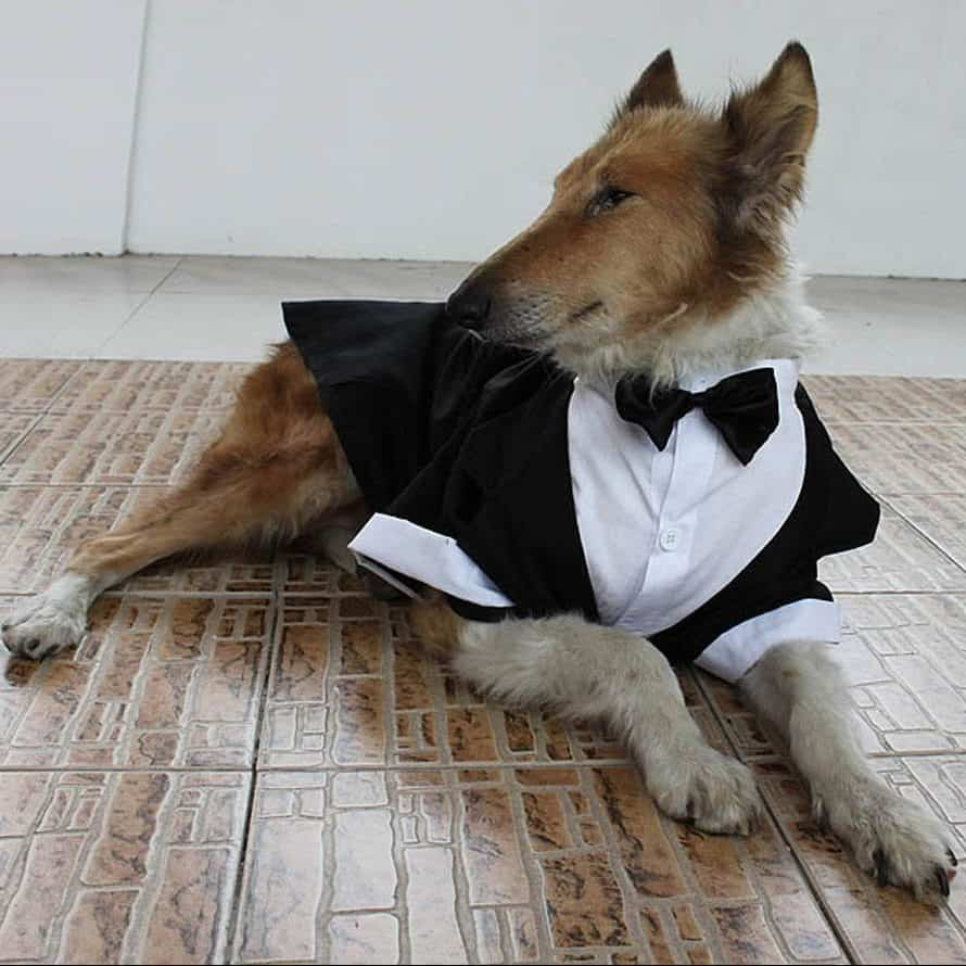 Large Dogs Bowtie Tails Suit Costume