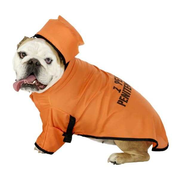 Orange Penitentiary Dog Costume