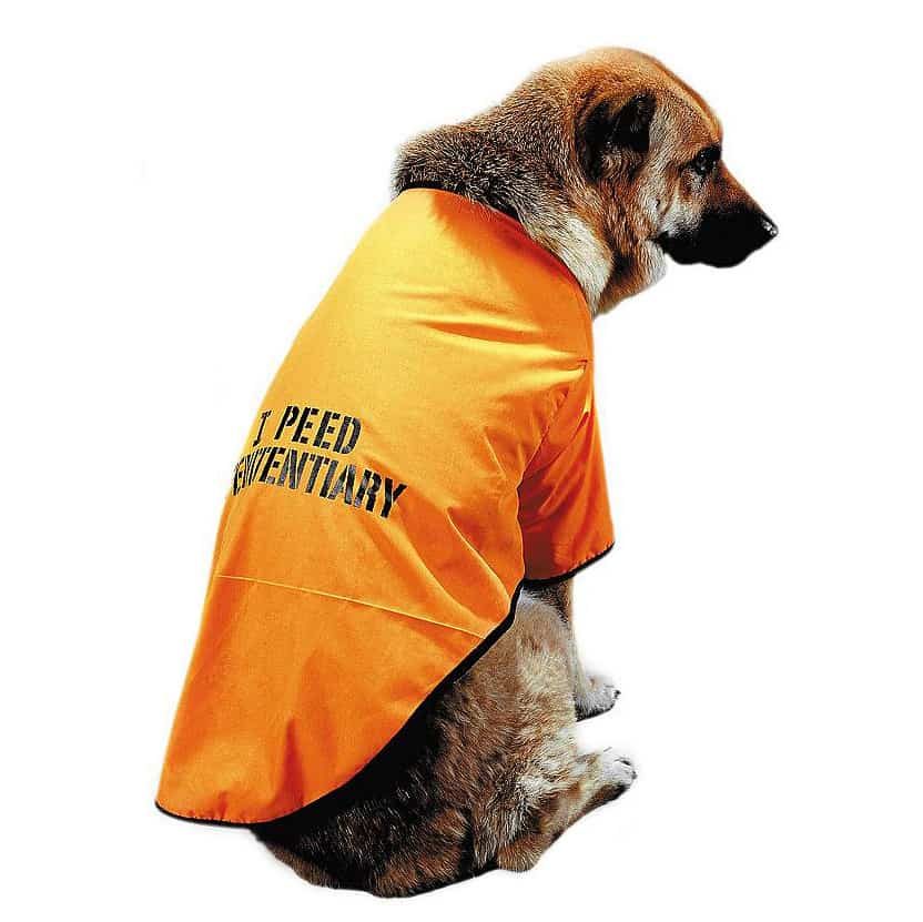 Orange Penitentiary Dog Outfit