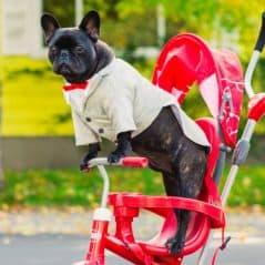 Pee Wee Herman Dog Tuxedo