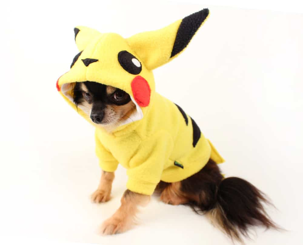 Black Chihuahua wearing a yellow Pokemon Pikachu hoodie