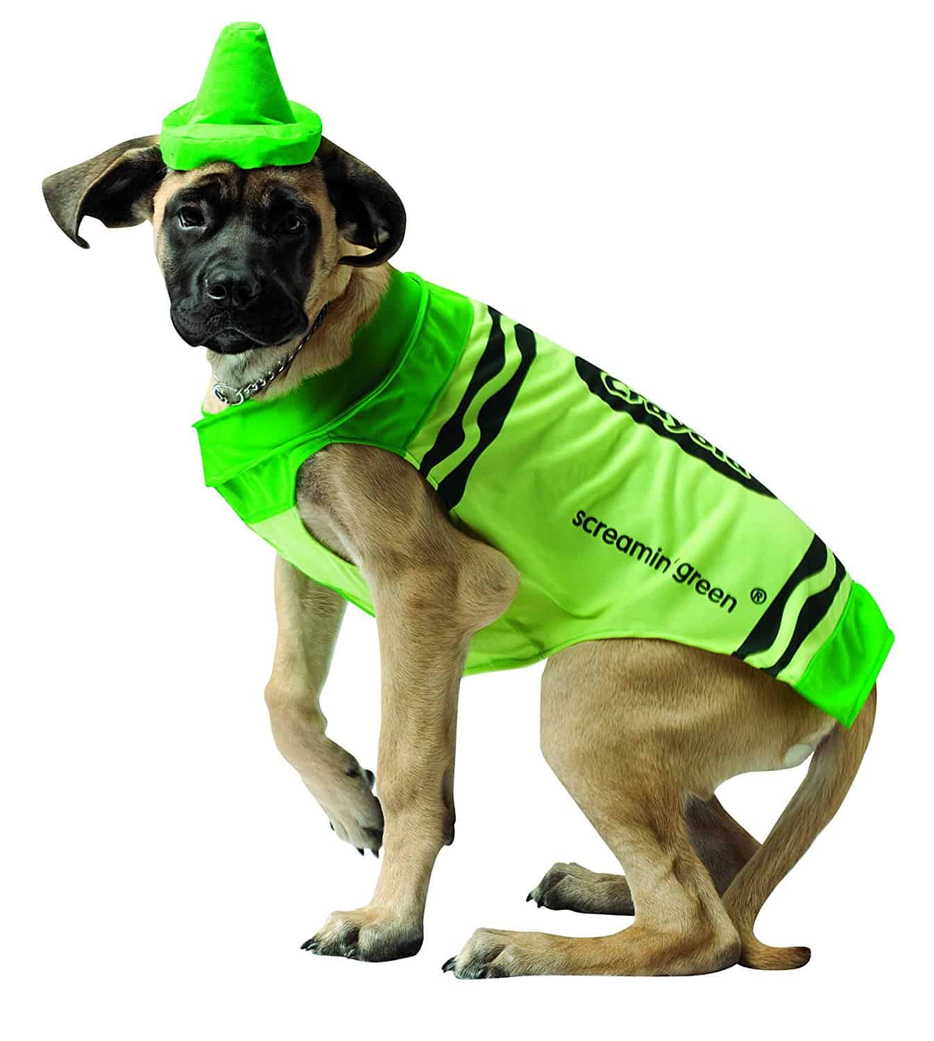 Big white dog in a green crayon costume