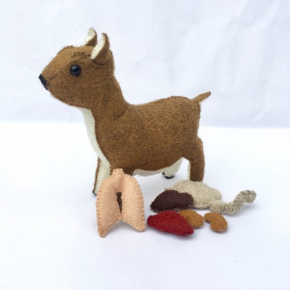 ATwistOfSara Stuffed Deer Anatomy Toy