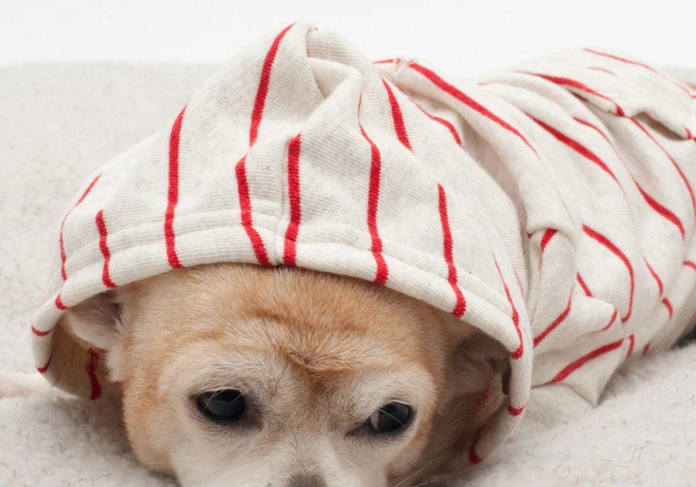 American Apparel Striped Flex Fleece Dog Zip Hoodie Buy Pet Clothes
