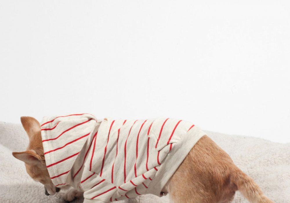 American Apparel Striped Flex Fleece Dog Zip Hoodie Dig