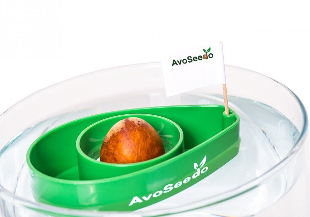 AvoSeedo DIY Grow Plant Kit
