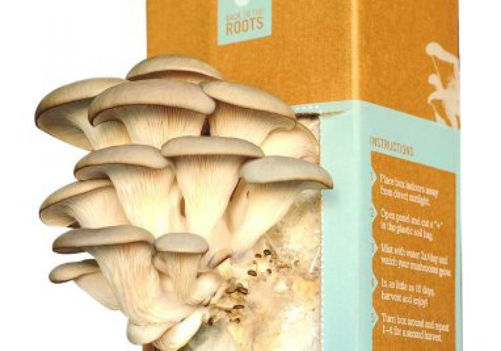 Back to the Roots Oyster Mushroom Kit DIY