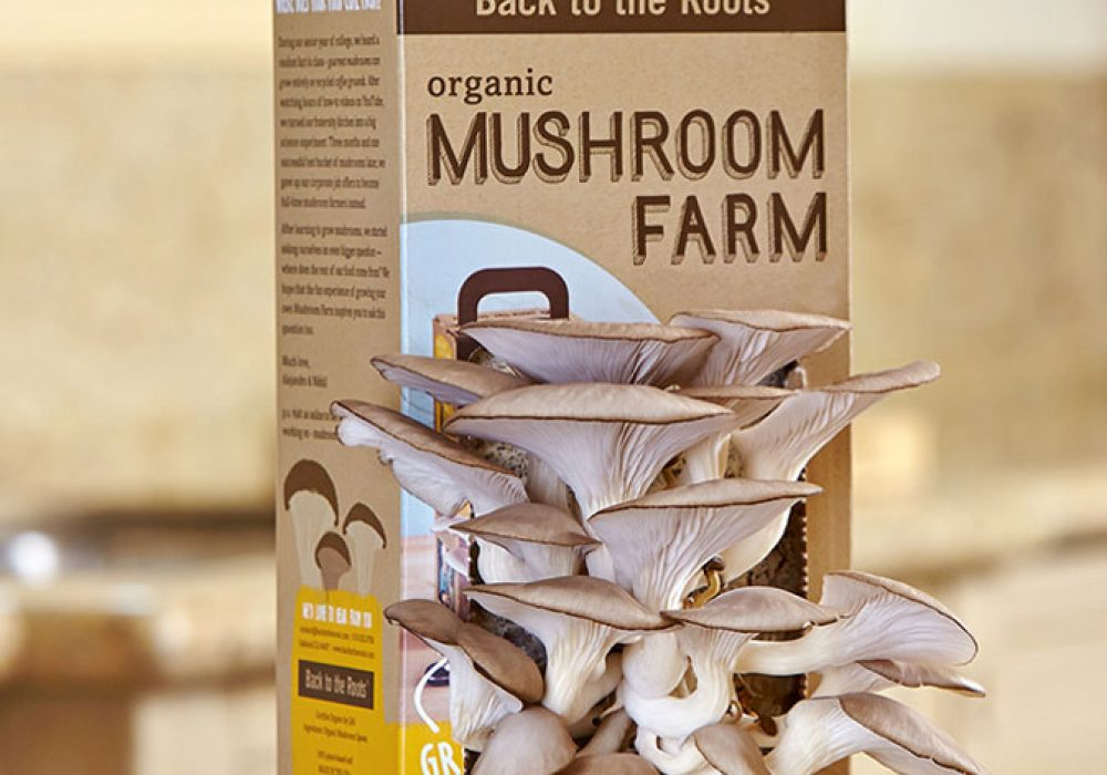 Back To The Roots Mushroom Farm - NoveltyStreet