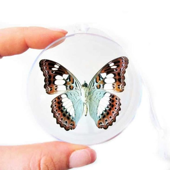 BicBugs Real Moduza Procris Blue Green White Butterfly Christmas Ornament