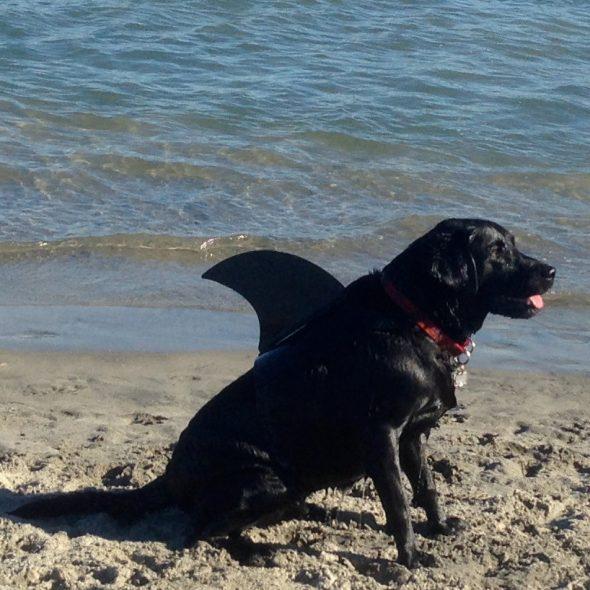 Black-Shark-Fin-Dog-Outfit.jpg