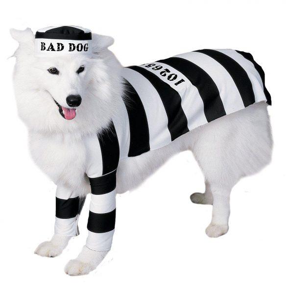 Black-and-White-Dog-Prison-Costume.jpg